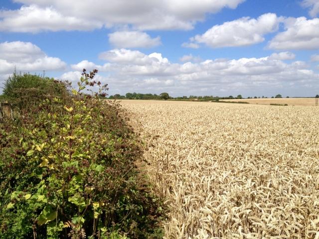 Looking across to Alderton