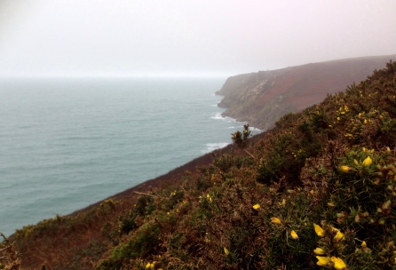 The hillside covered in gorse bushes